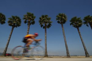 Cyclist Palm Trees