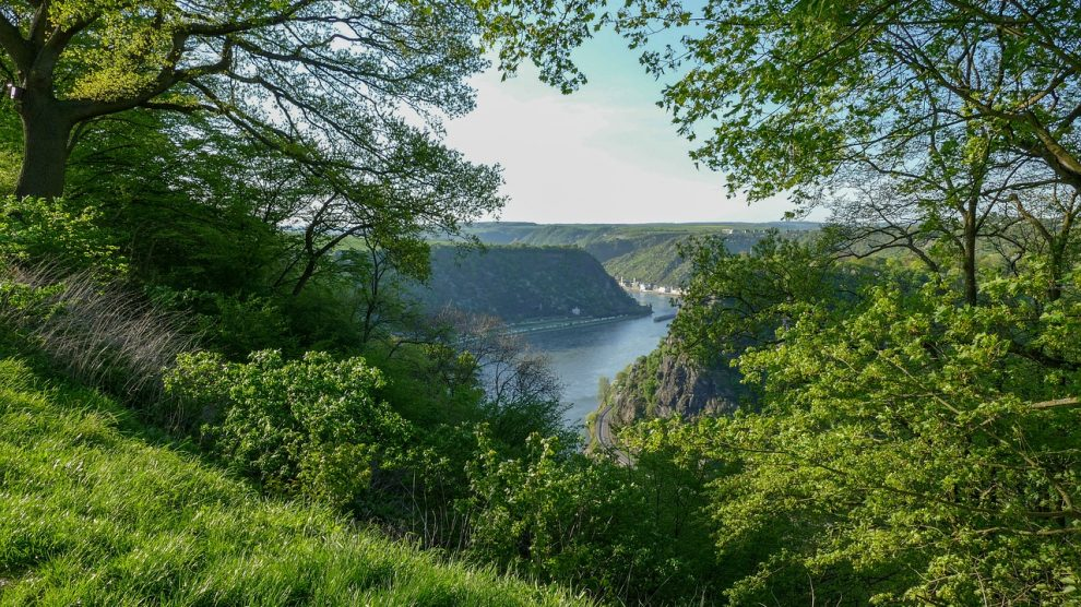 Rhine Loreley